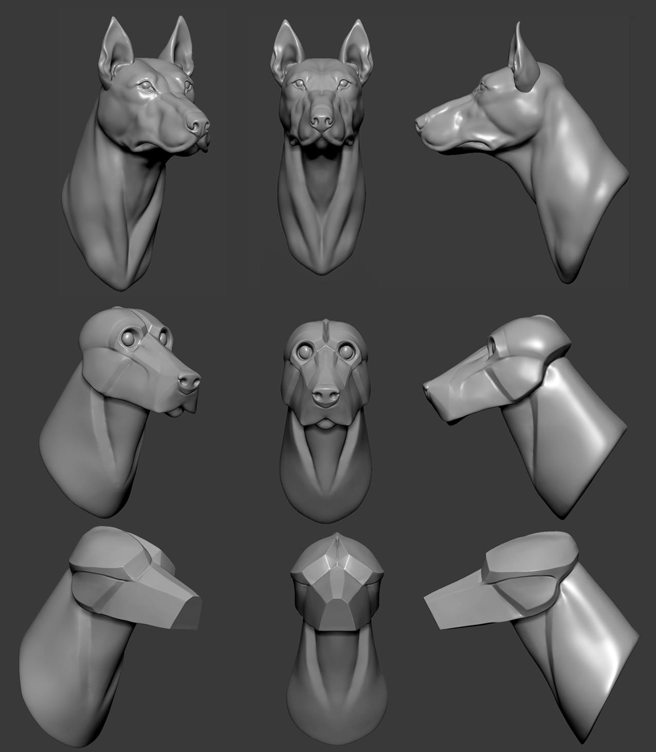 ArtStation - Animal/Creature anatomy studies, Oscar Loris