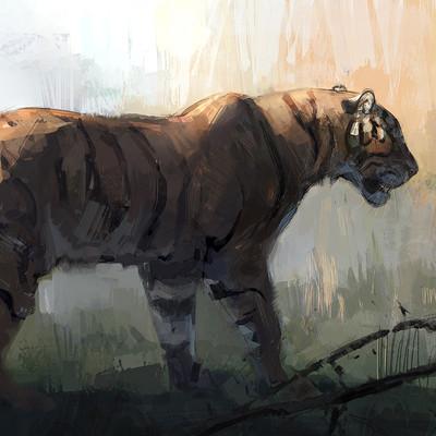 Jonathan kuo tiger