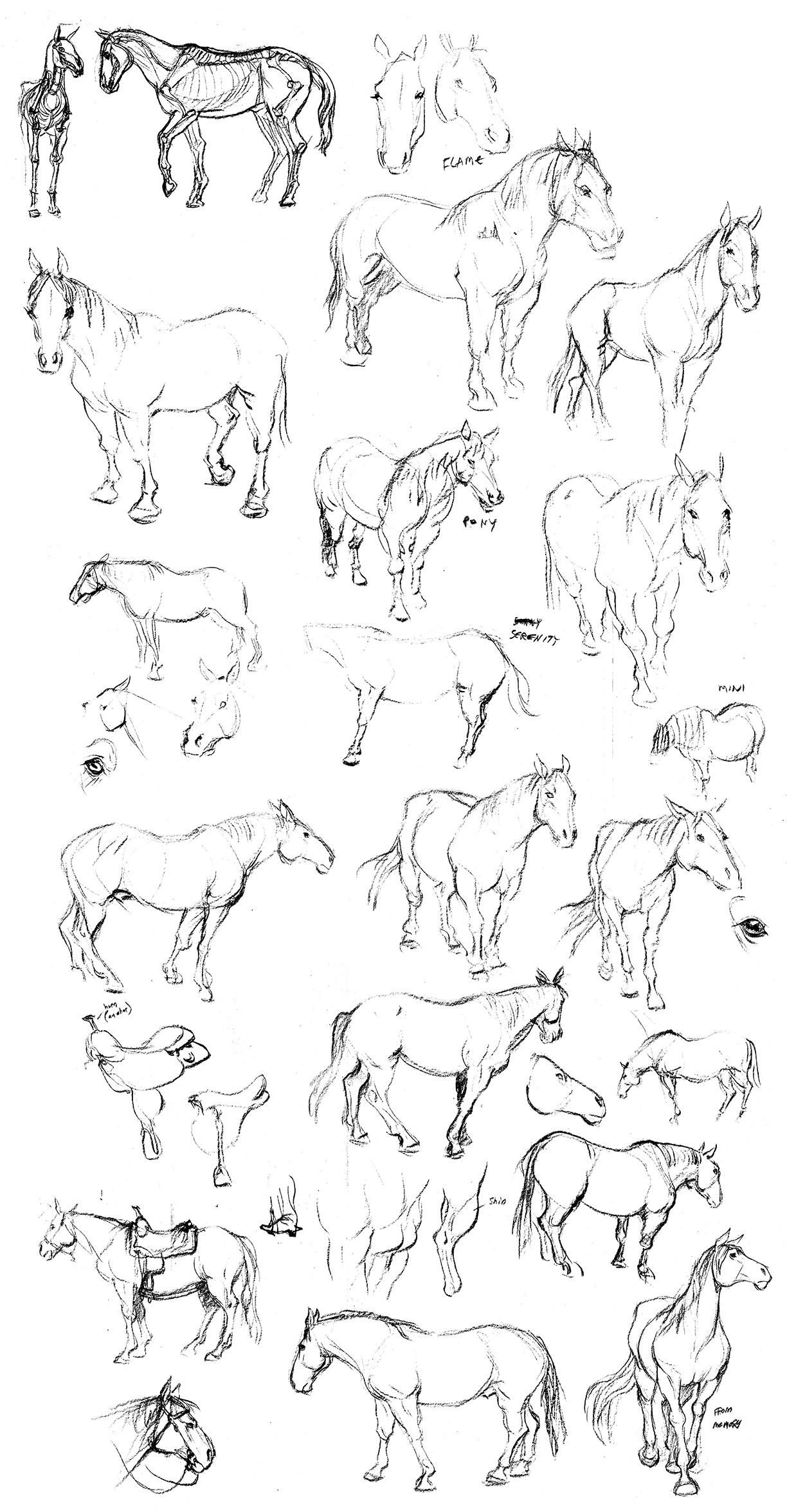 Our technical animator Aaron Dibbs has horses, and he let us come draw them.
