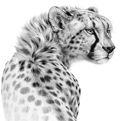 Bill melvin cheetah