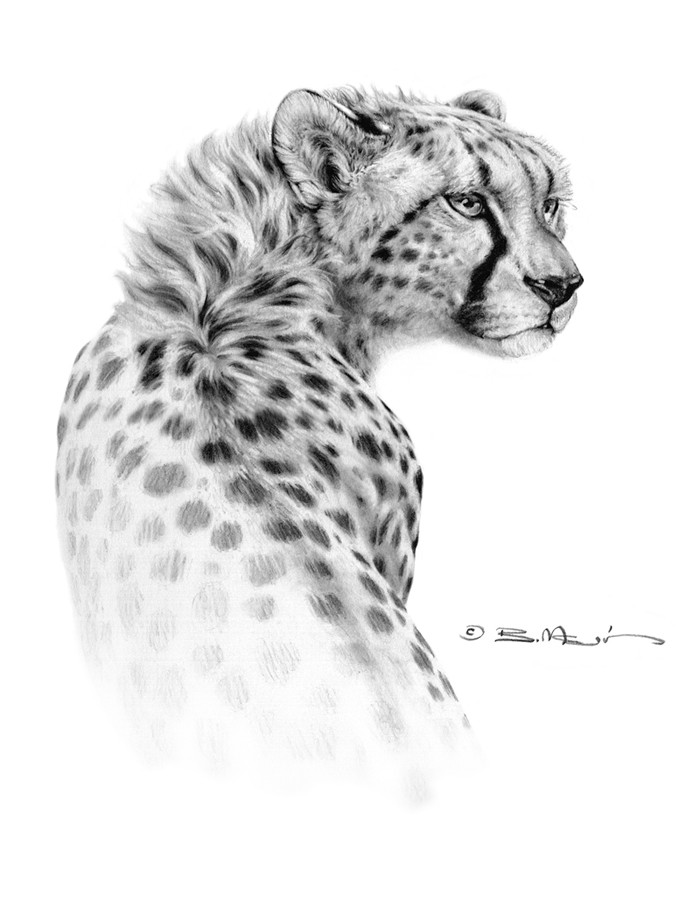 Bill melvin cheetah