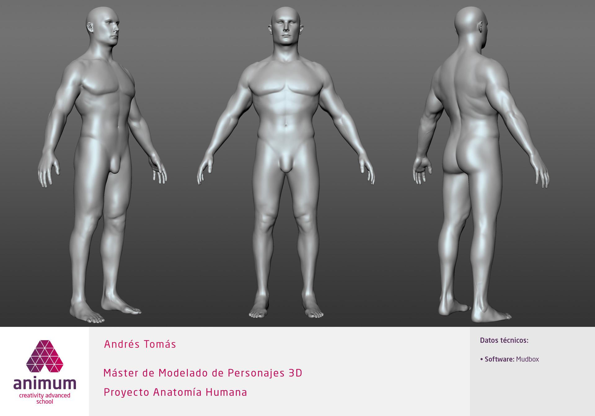 Andrés Tomás - Human Male Anatomy Study