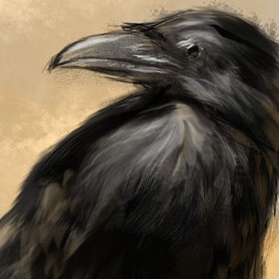Cory collins crowstudy