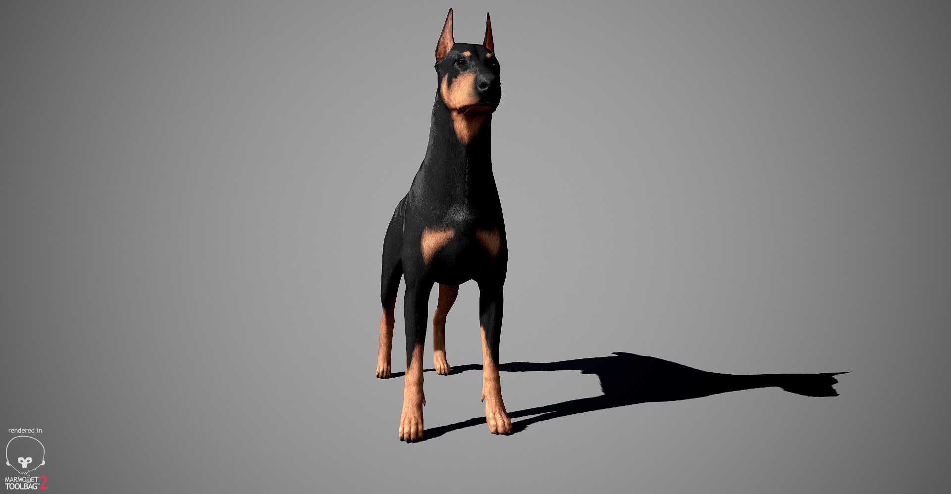 Alex lashko doberman by alexlashko marmoset 14