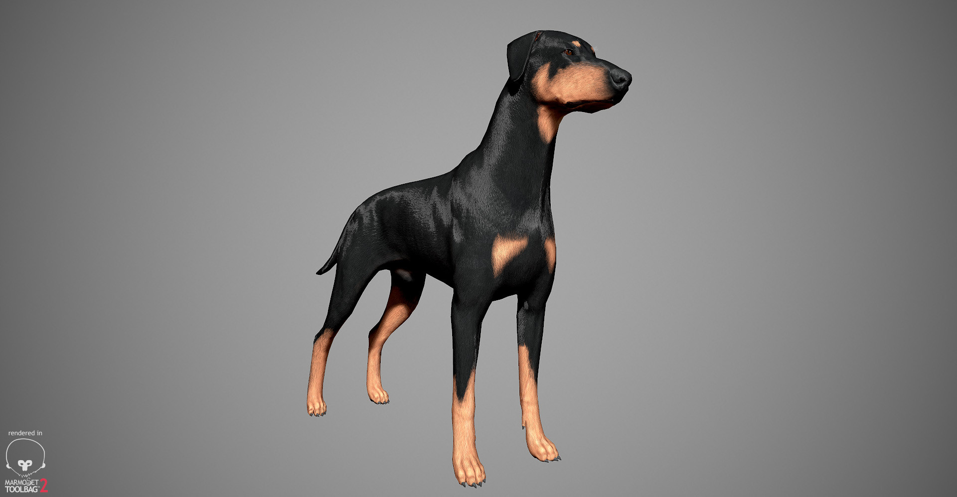 Alex lashko doberman by alexlashko marmoset 18
