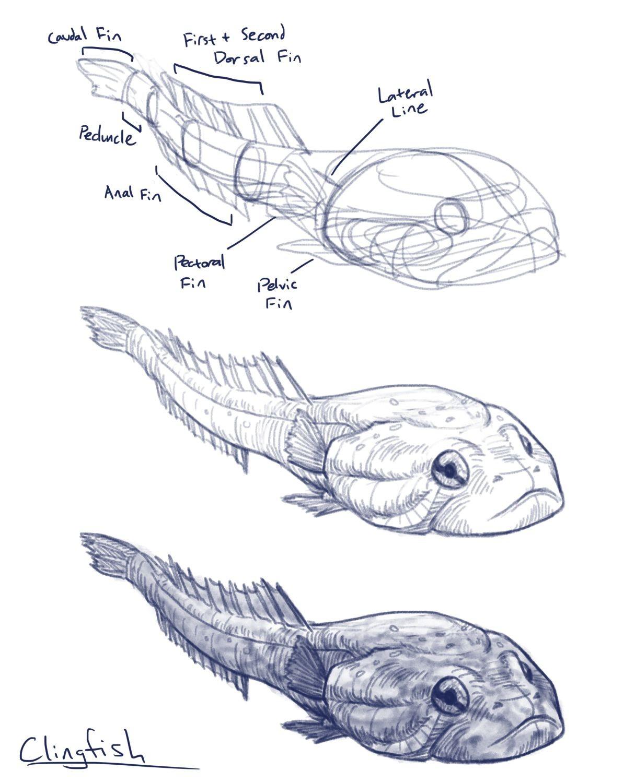 Penny wilkerson penelope wilkerson wk6 clingfish
