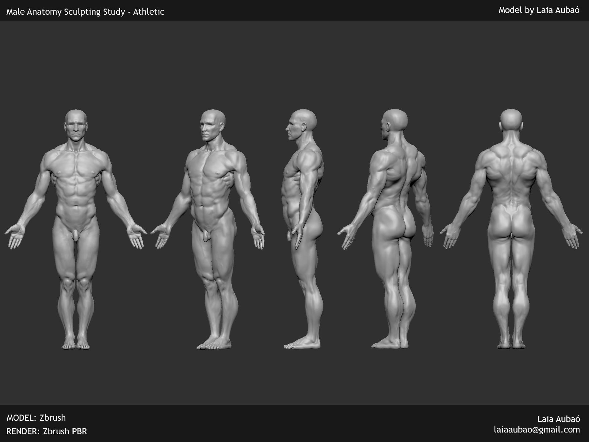Artstation Anatomy Studies Laia Auba