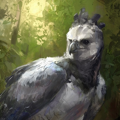 Jonathan kuo eagle low1
