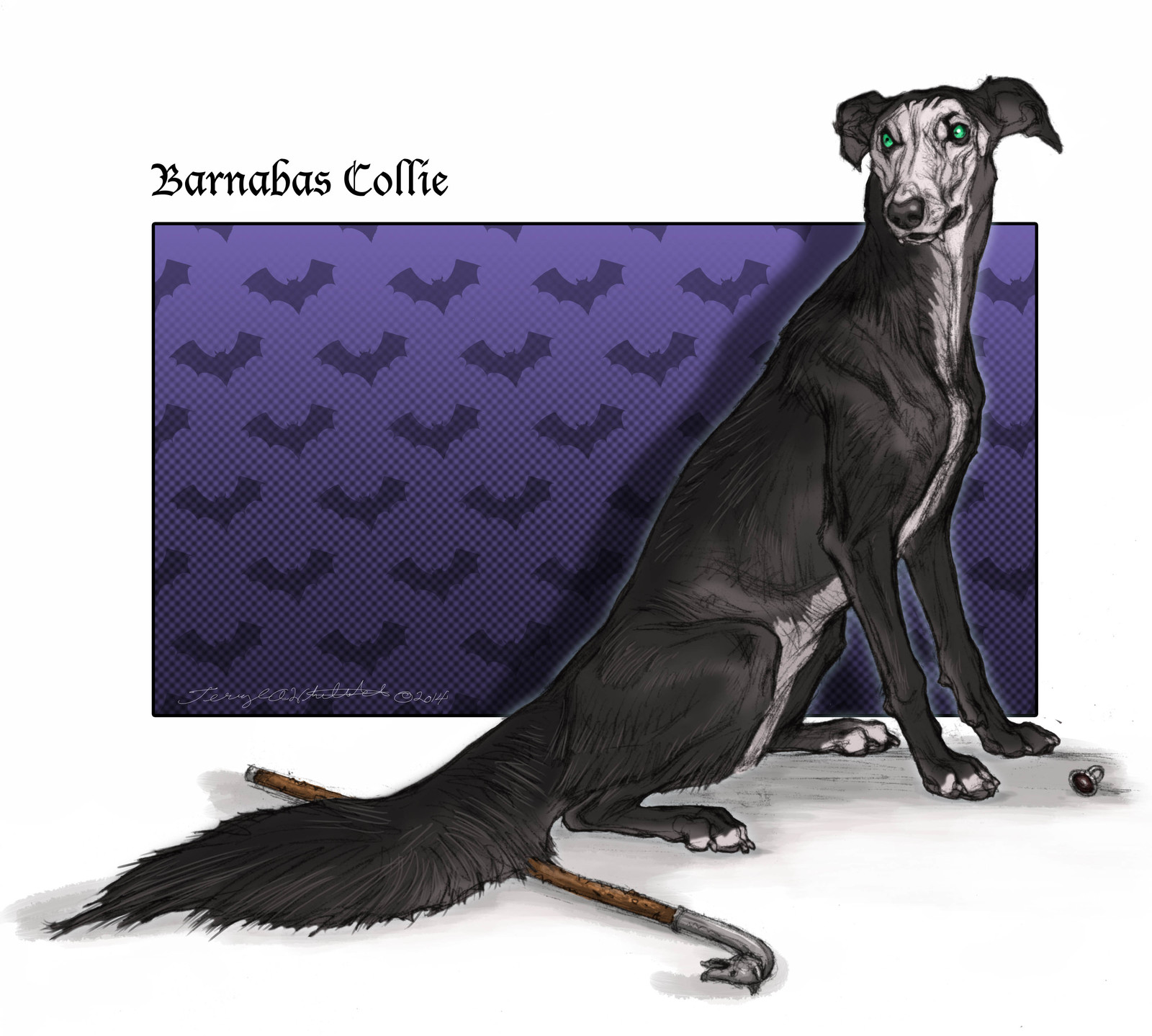 Barnabas Collie