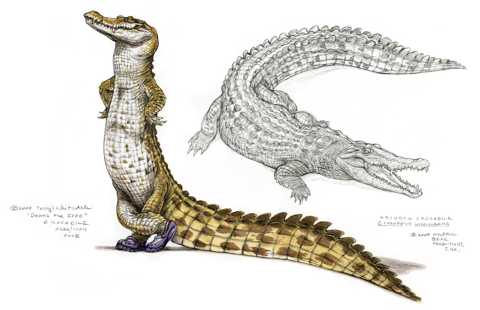 Croc wearing Crocs and crocodile study