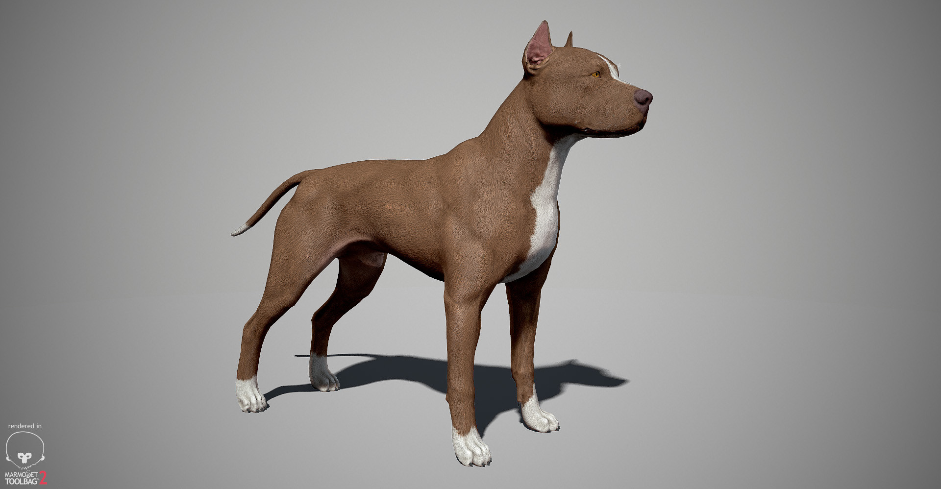 Alex lashko pitbull by alexlashk marmoset 02