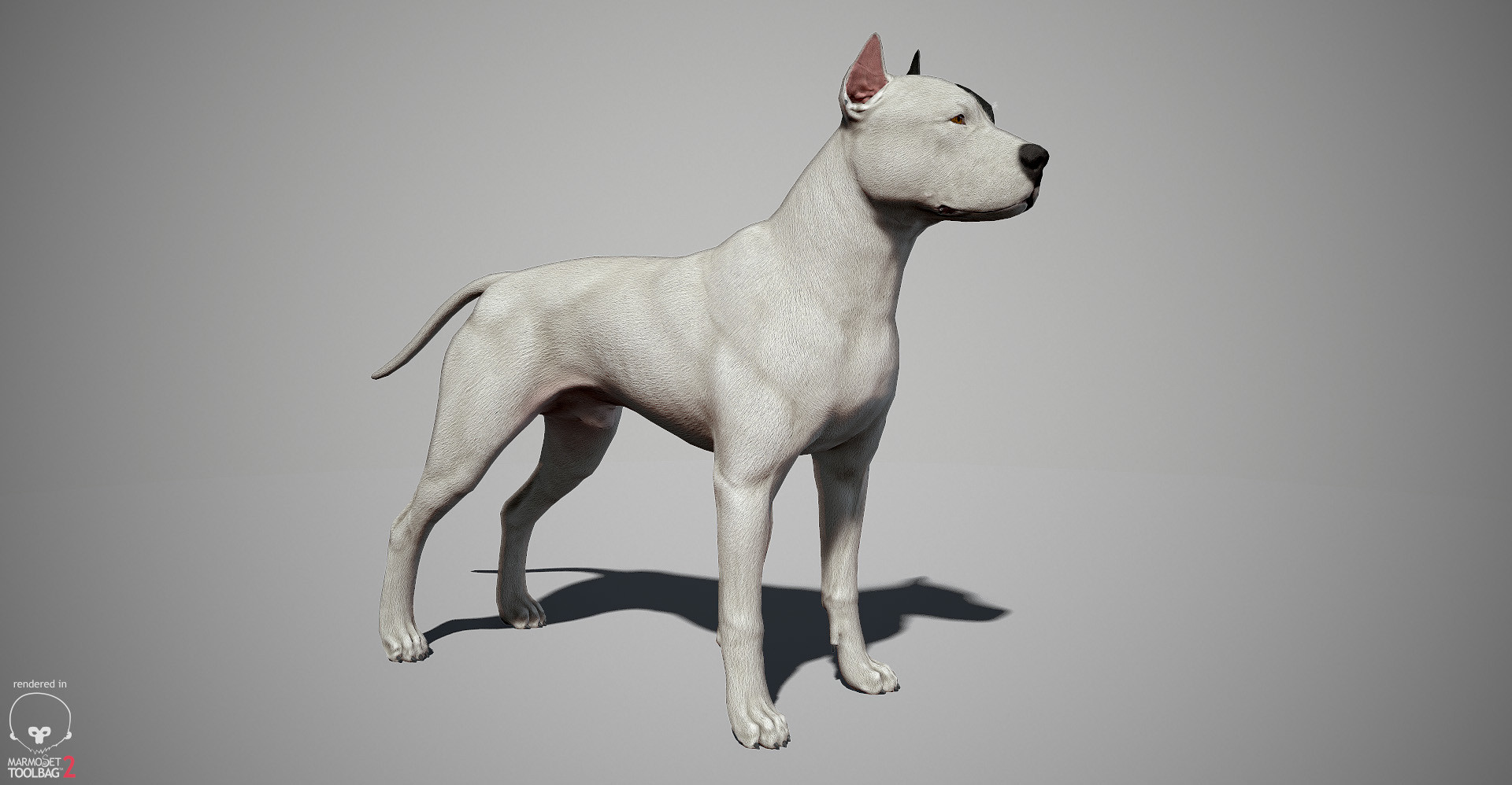 Alex lashko pitbull by alexlashk marmoset 03