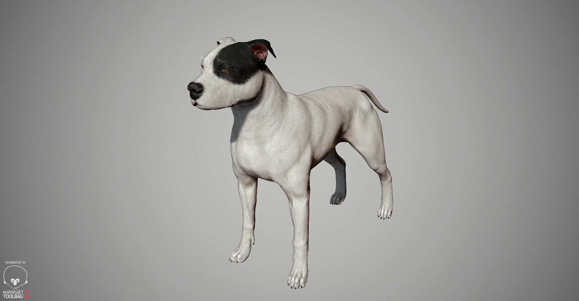 Alex lashko pitbull by alexlashk marmoset 20