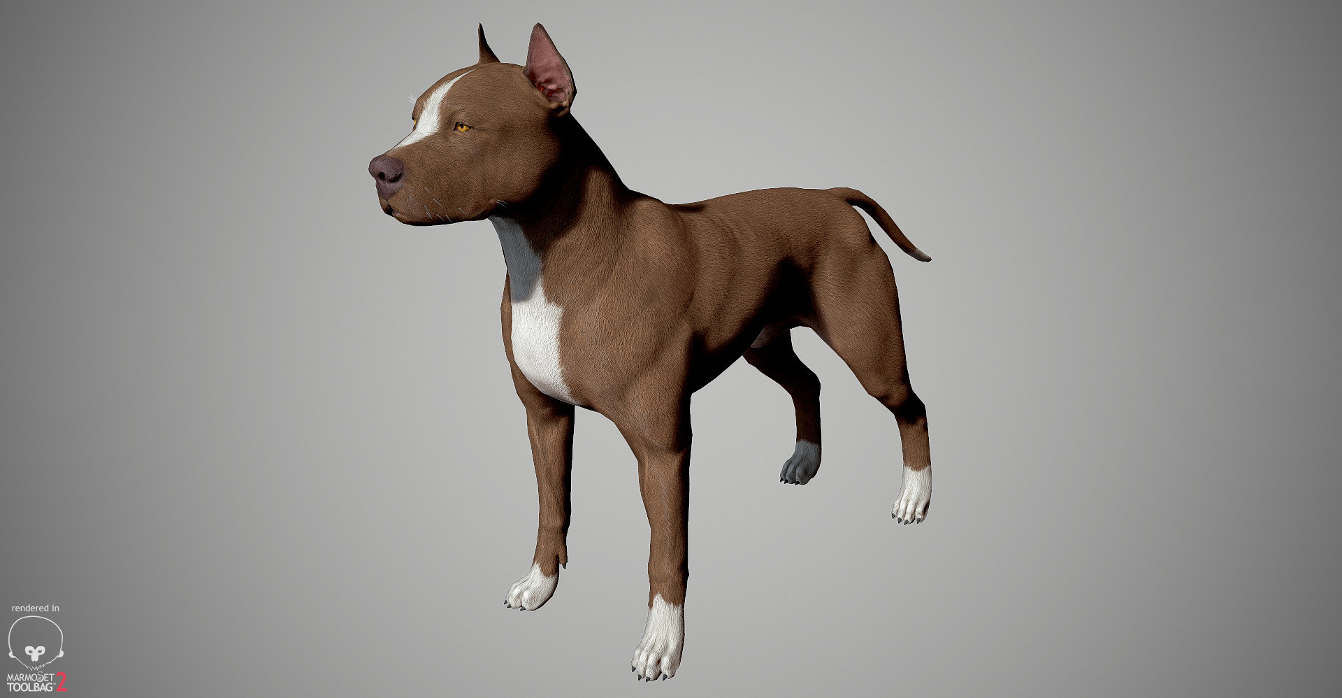 Alex lashko pitbull by alexlashk marmoset 25