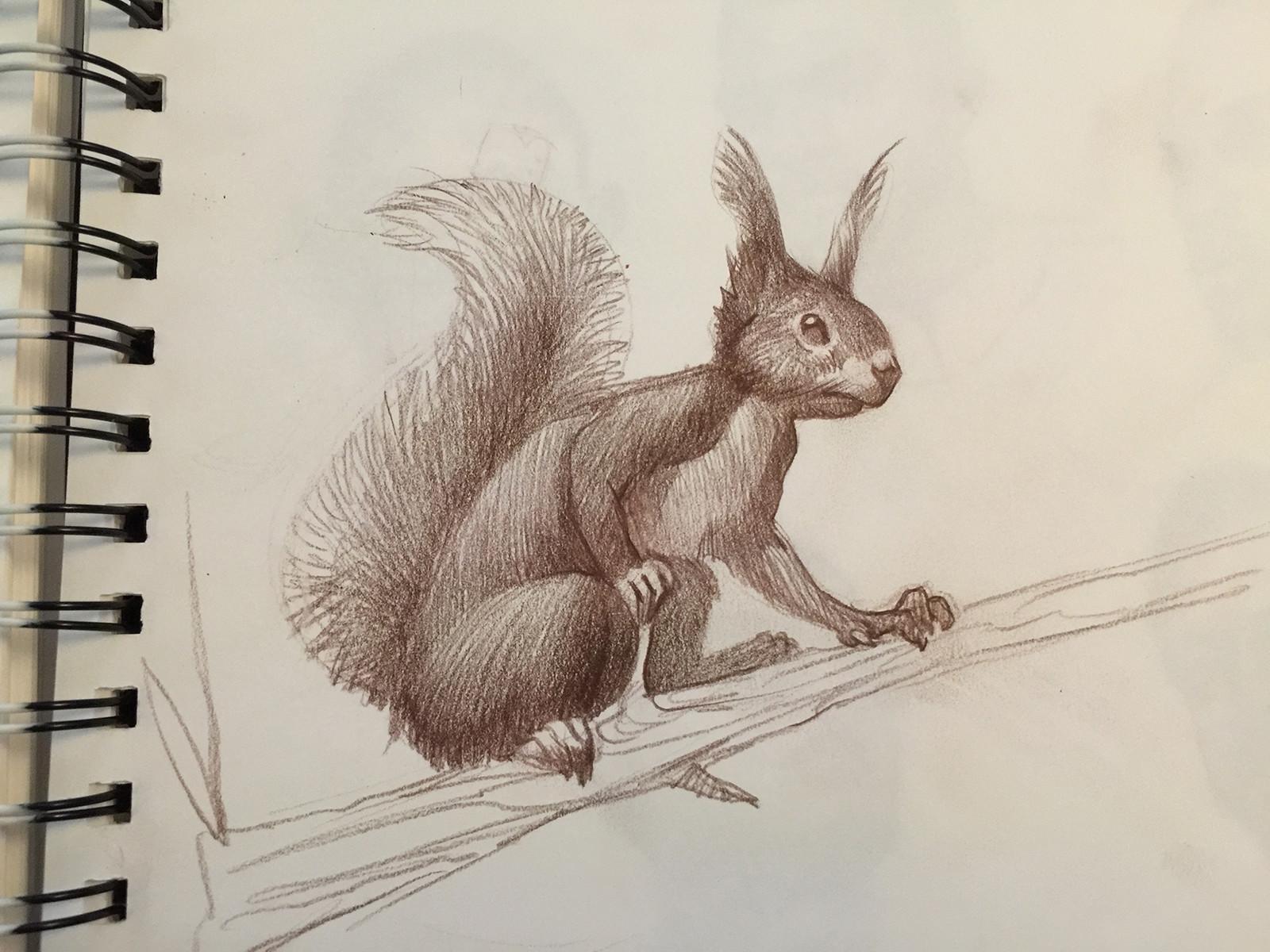 Tufted Squirrel