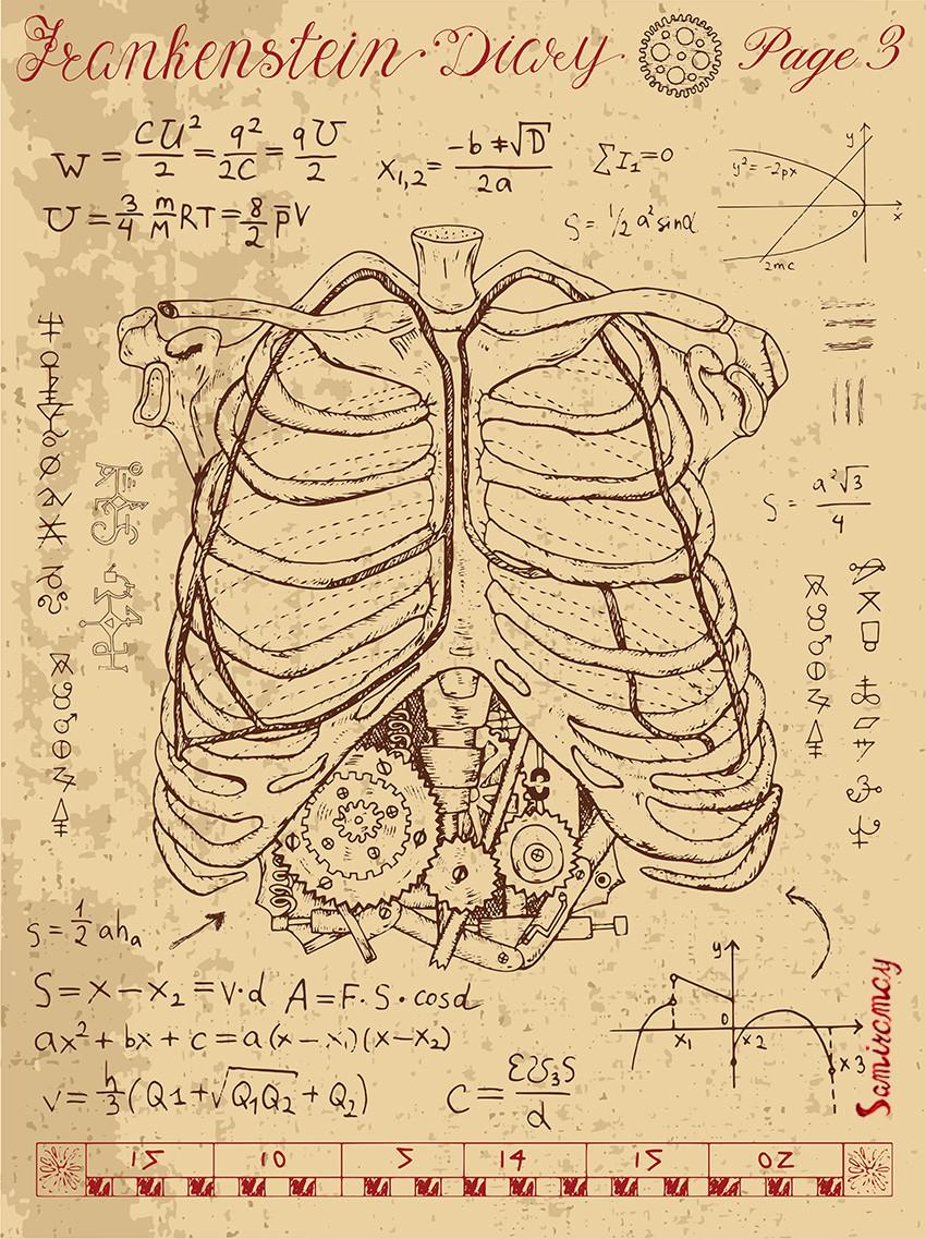 Chest Ribs Anatomy