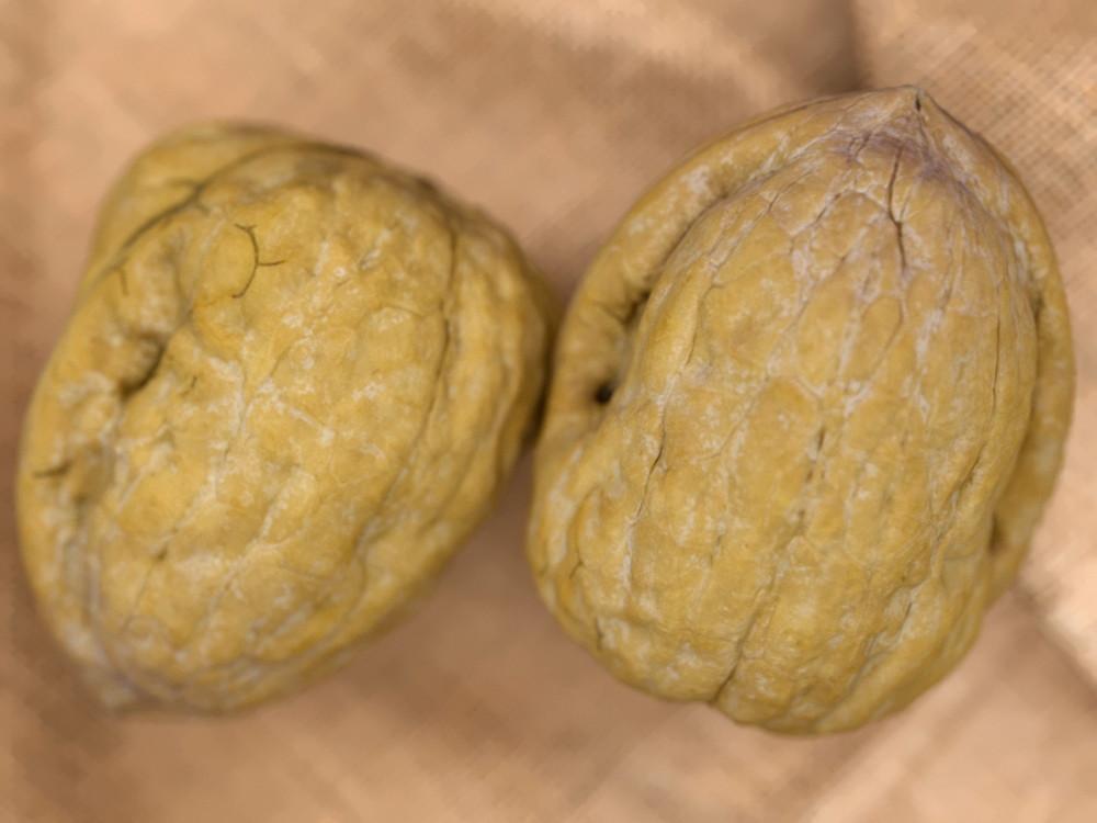 Carlos faustino wallnuts ref33