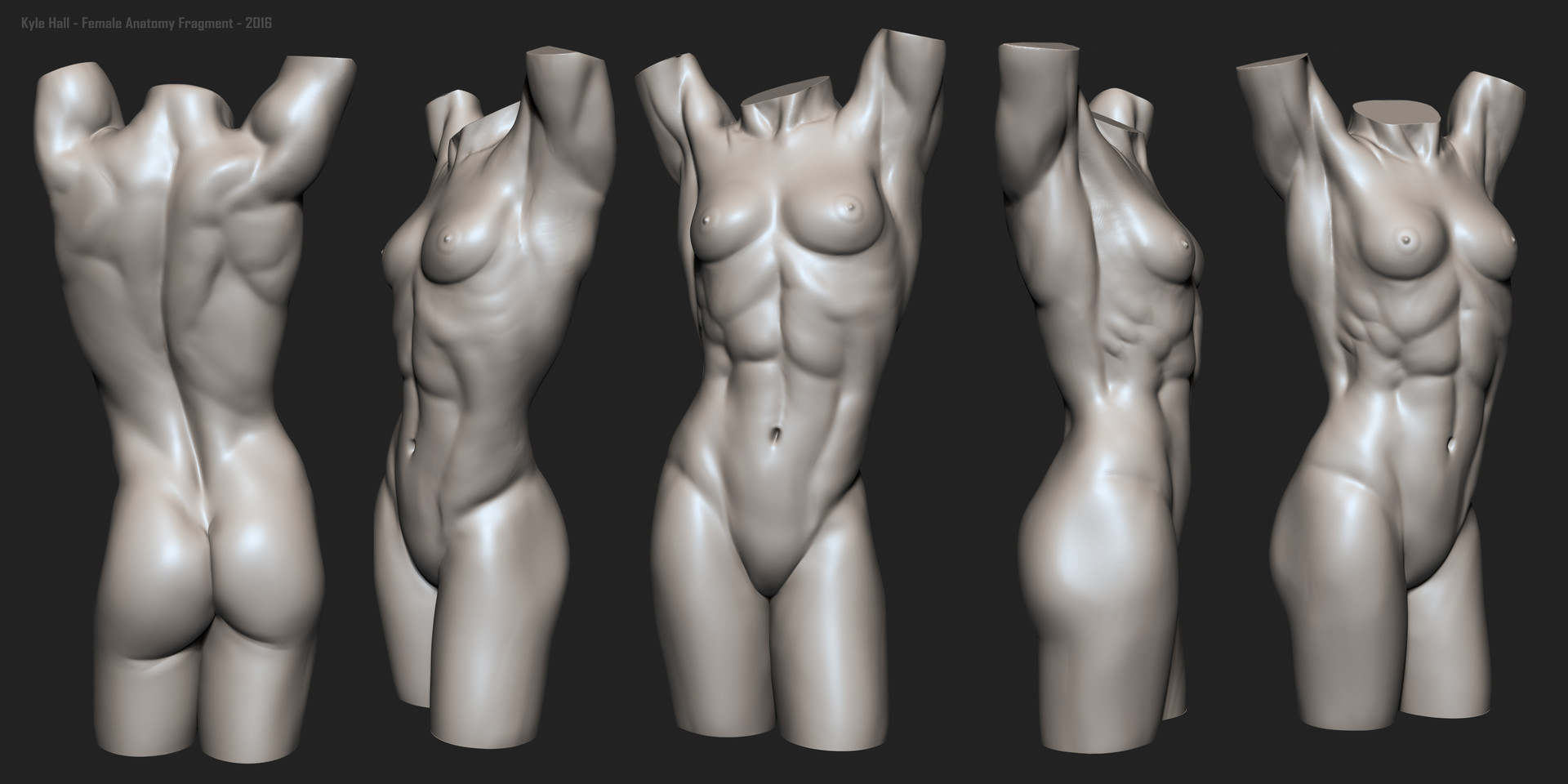 Kyle Hall - Female Torso Anatomy Fragment