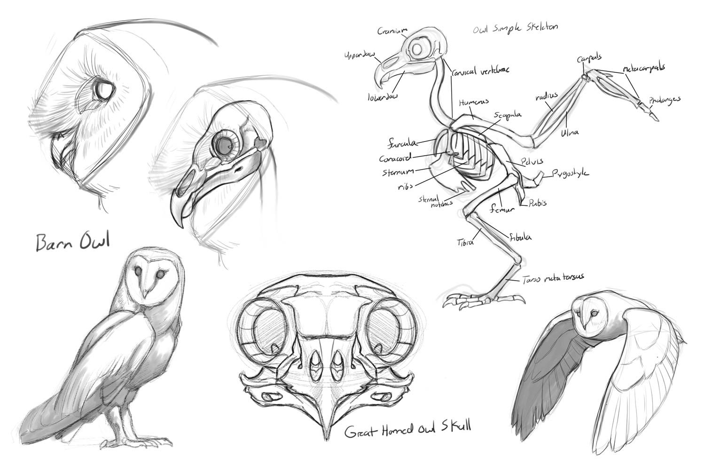 Fancy Bird Head Anatomy Motif - Physiology Of Human Body Images ...