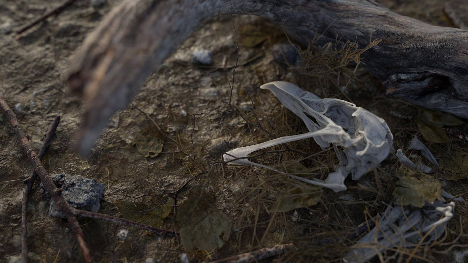 Nature Morte #3
