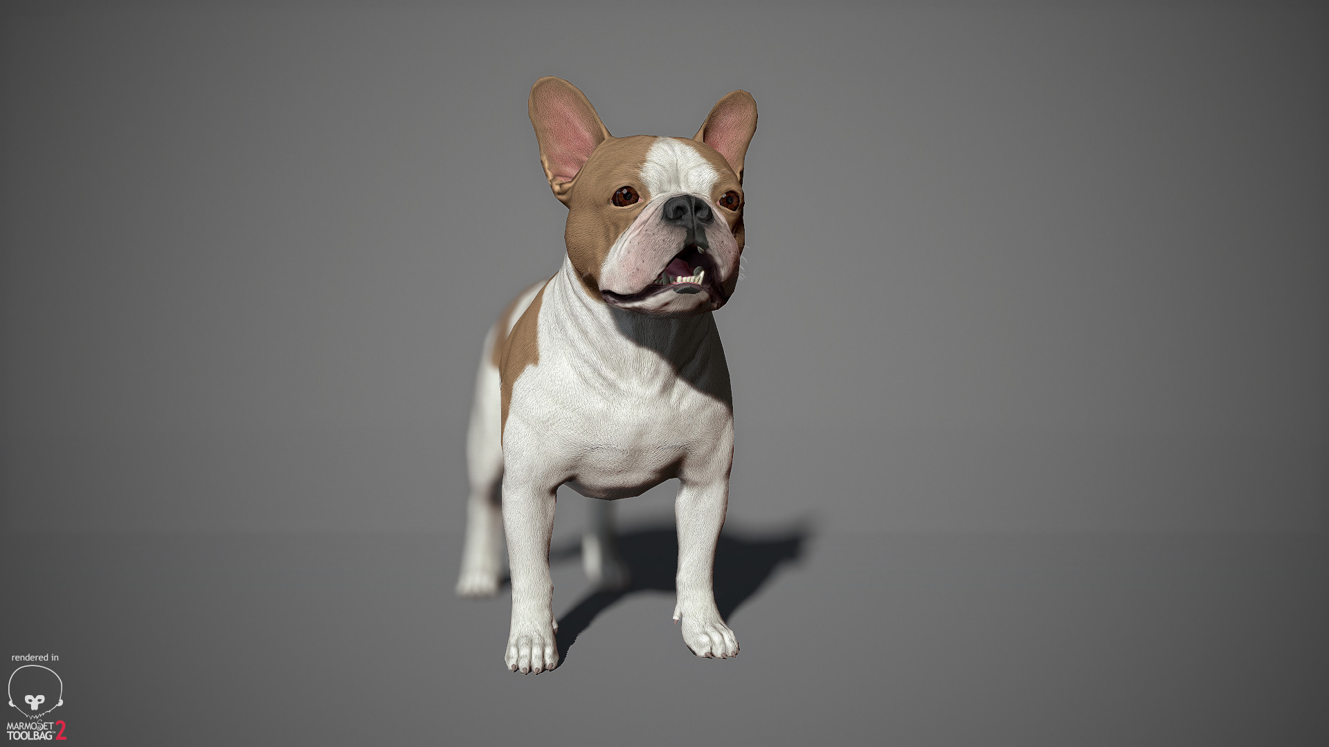 Alex lashko frenchbulldog by alexlashko marmoset 14