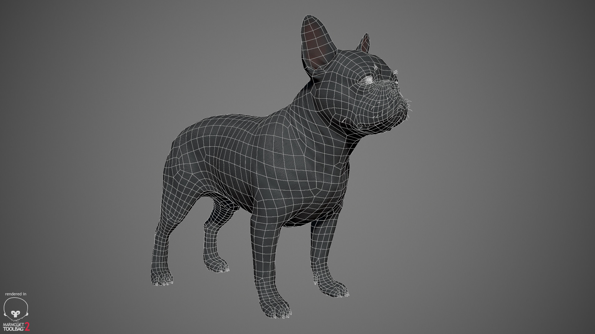 Alex lashko frenchbulldog by alexlashko wireframe 01