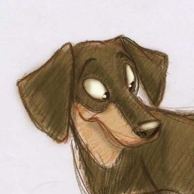 Vipin jacob dachshund