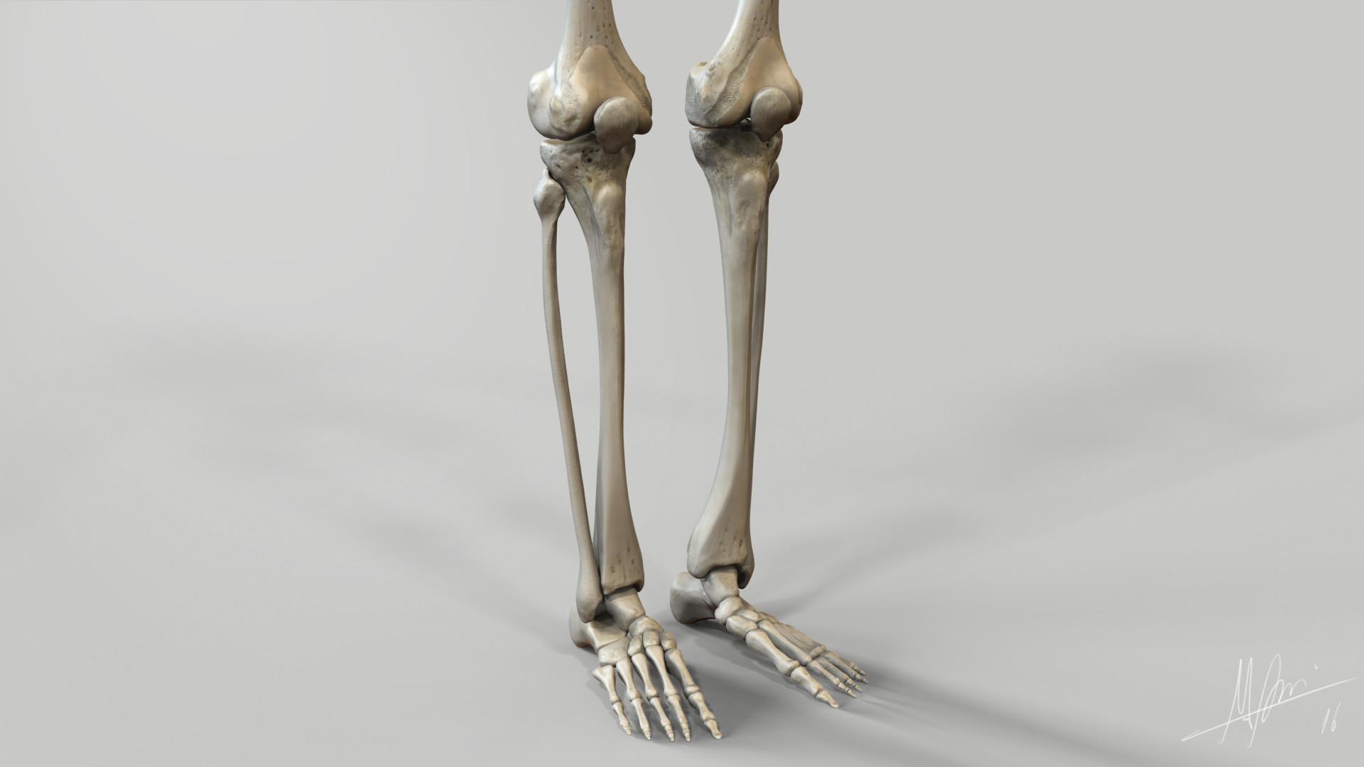 Marco Borsoi Anatomy Study Corch