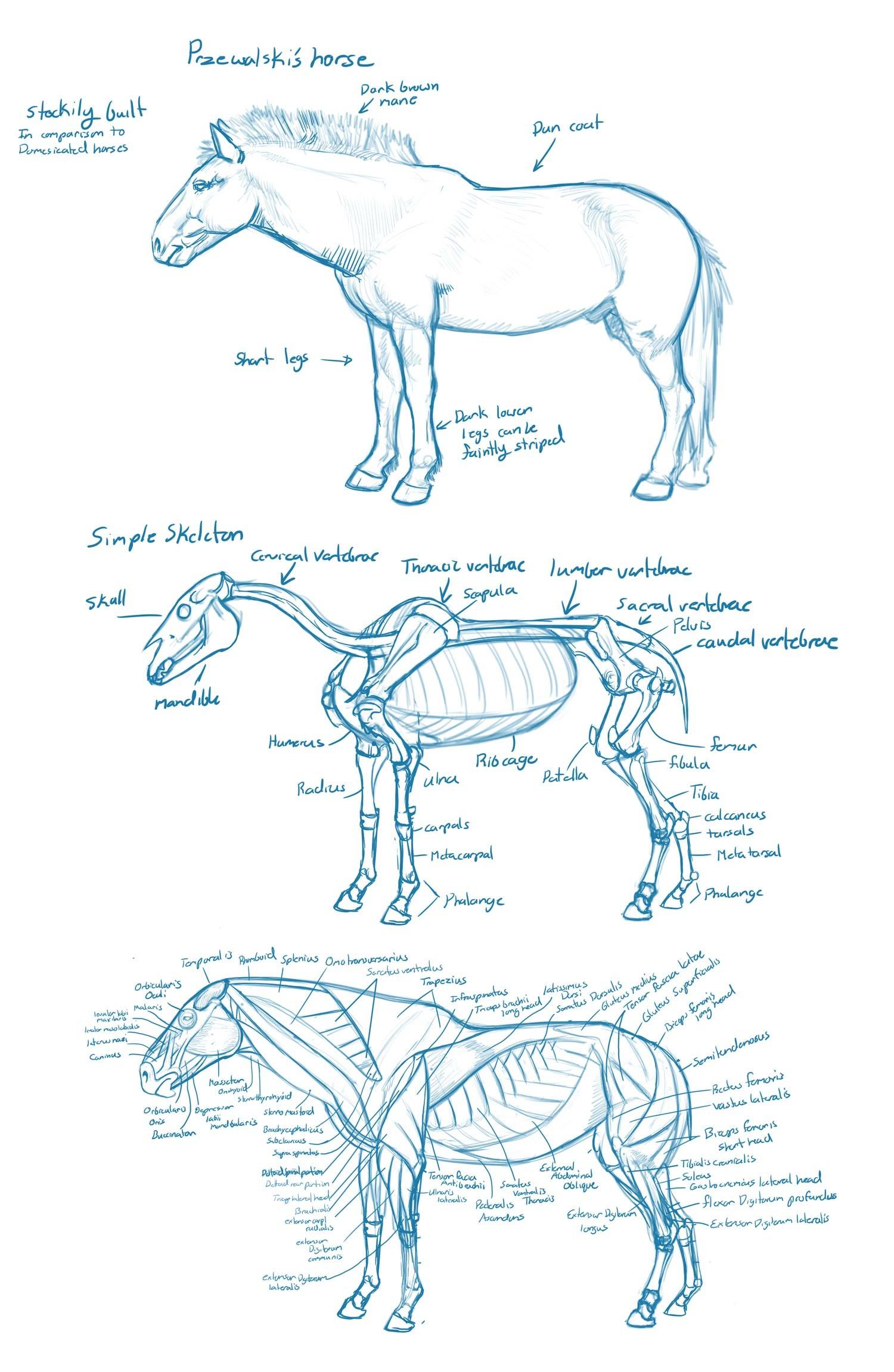 Beste Hummer Anatomie Diagramm Bilder - Menschliche Anatomie Bilder ...