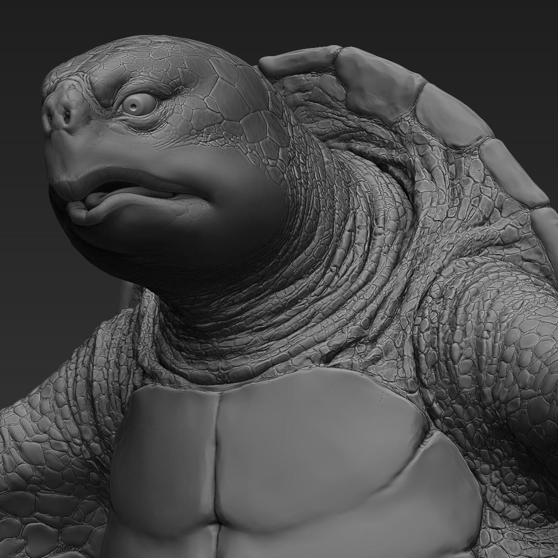 Martin krol turtle 01
