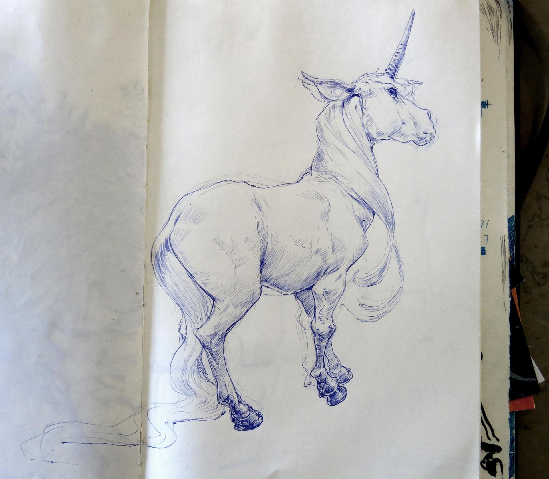 Even amundsen 262 unicorn
