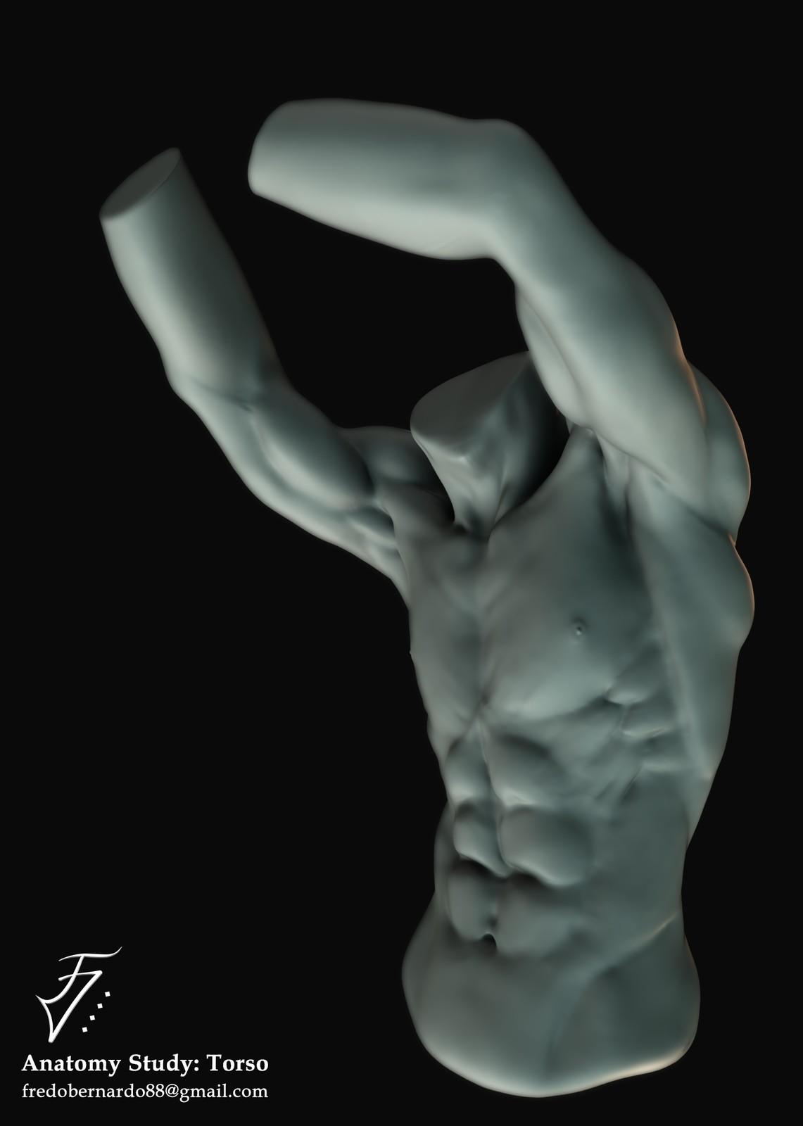 Anatomy Study: Torso
