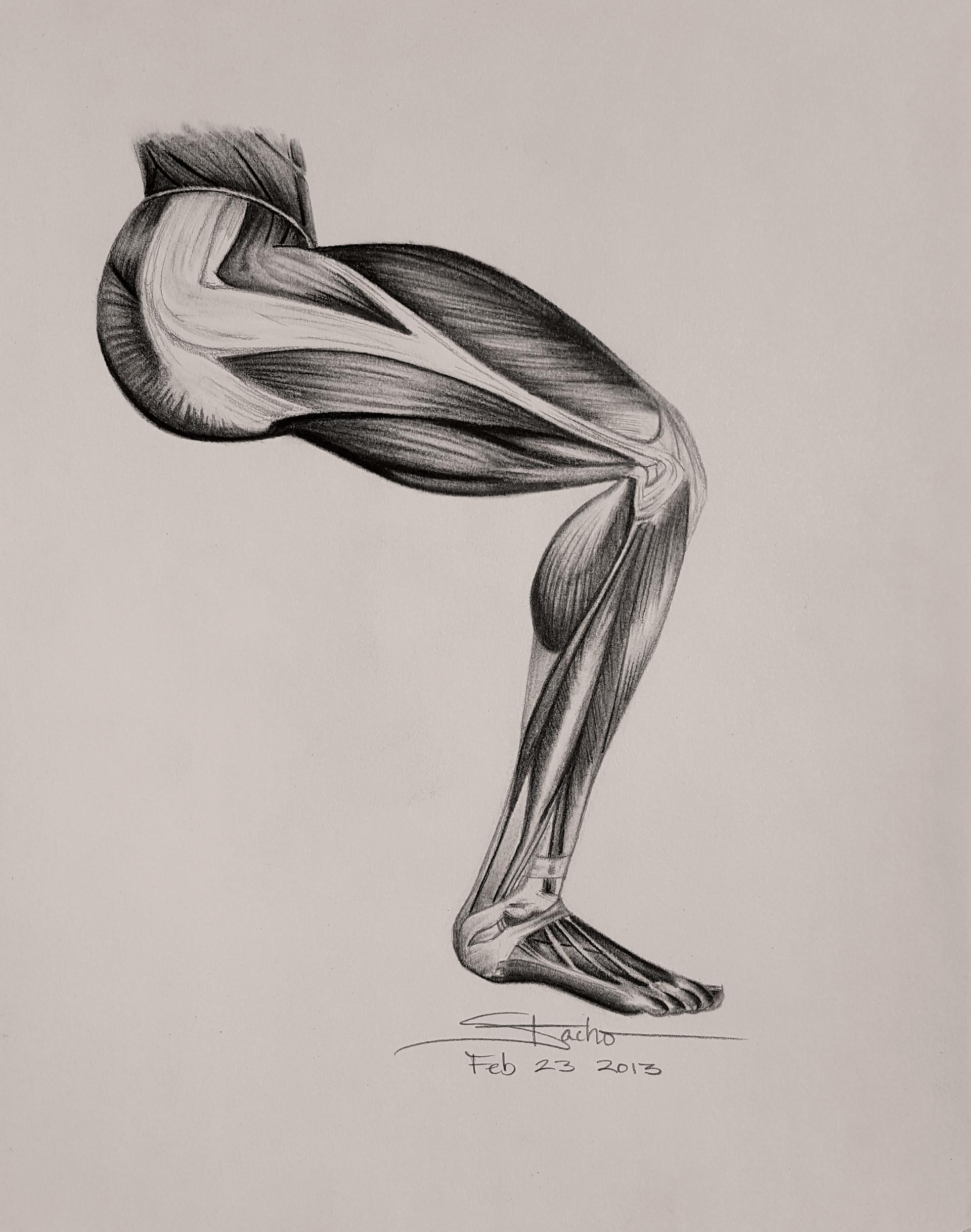 Dwayne stacho right leg muscles