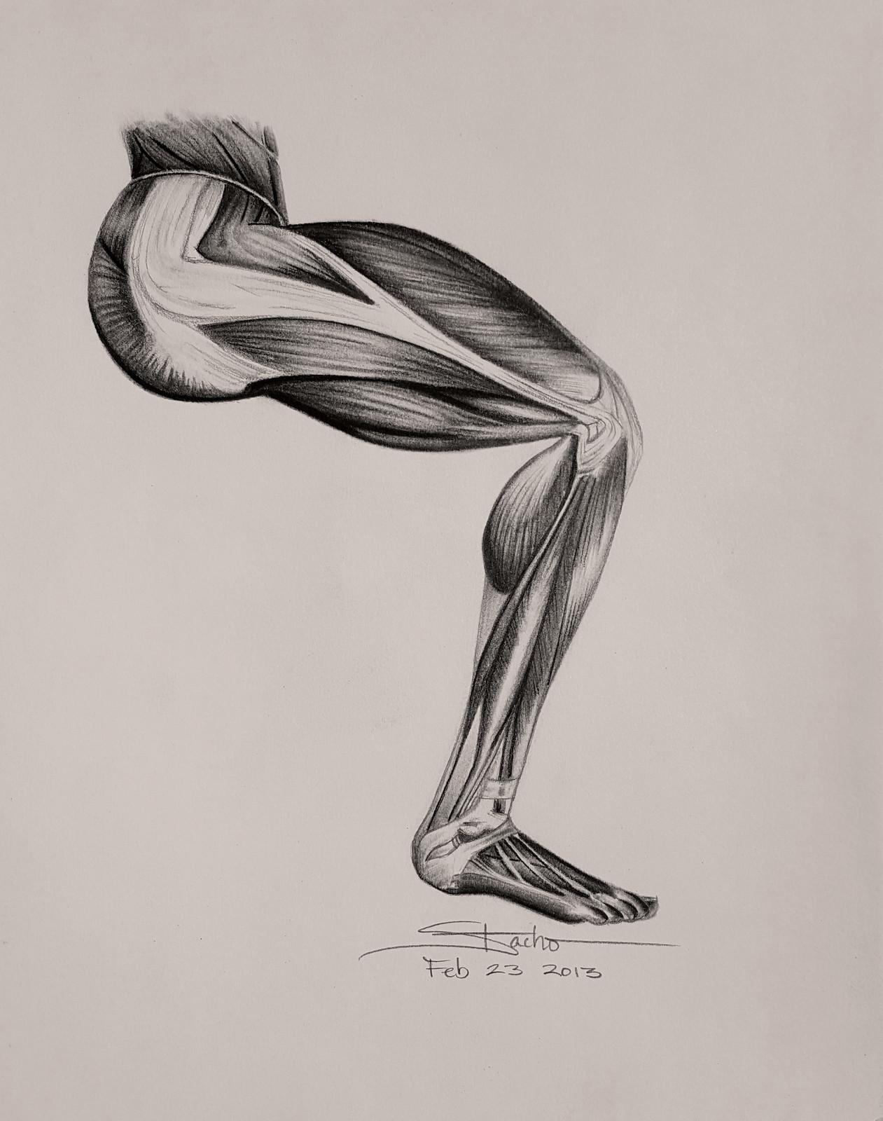 Anatomy of the Right Leg