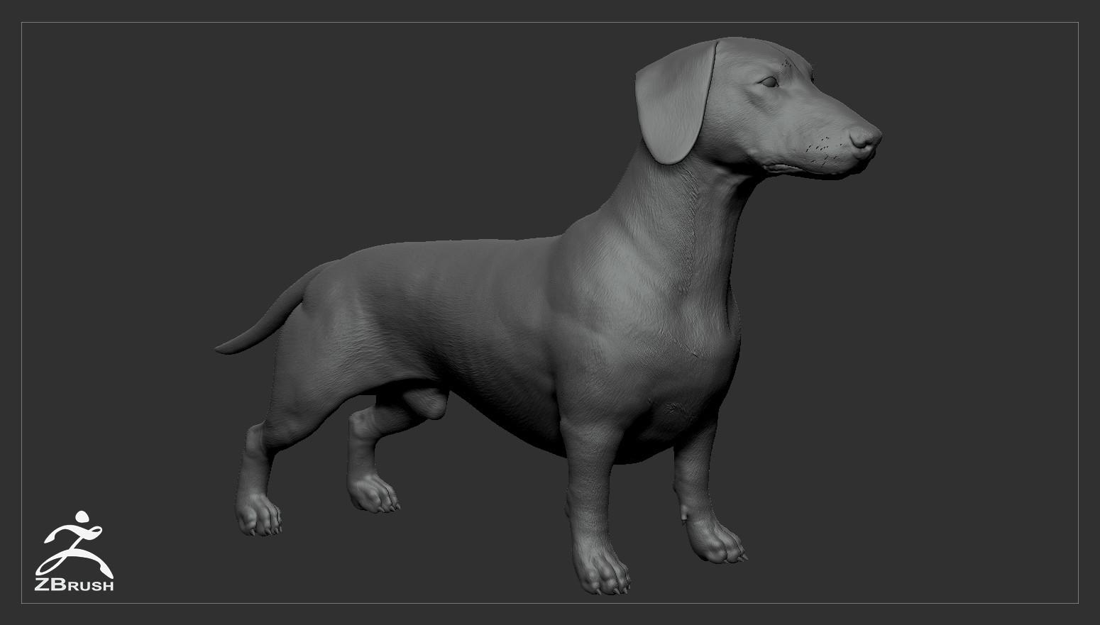 Alex lashko dachshund by alexlashko zbrush 01