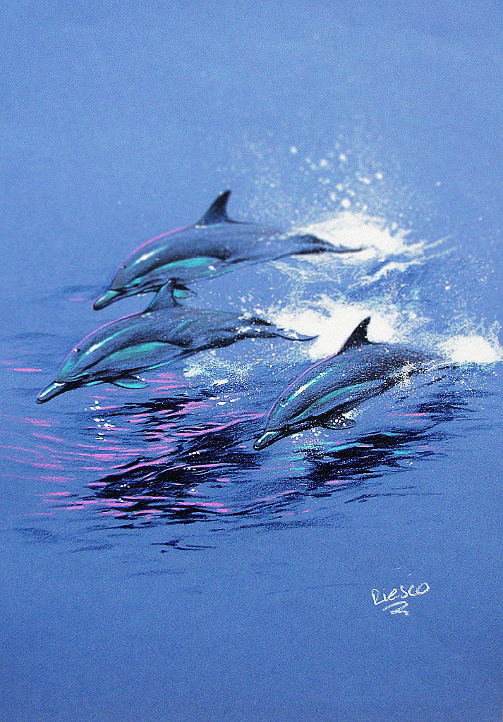 Nacho riesco gostanza pencil dolphins