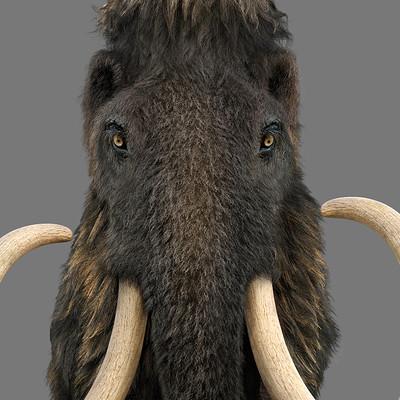 Damir g martin final mammoth2cropp2