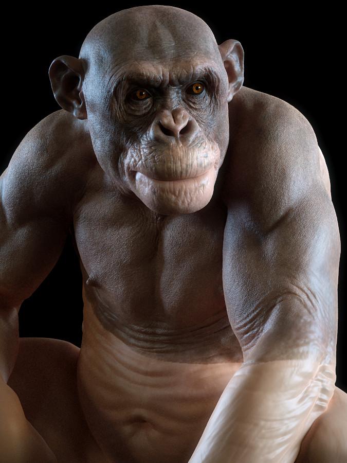 Bald Chimpy
