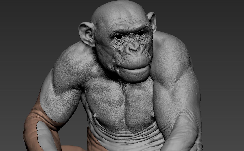 Chimp Detailing
