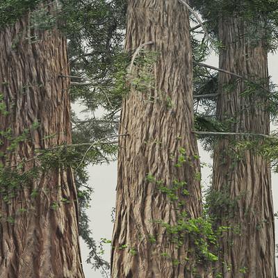 Damir g martin tree 2