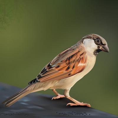 Rajesh sawant sparrow