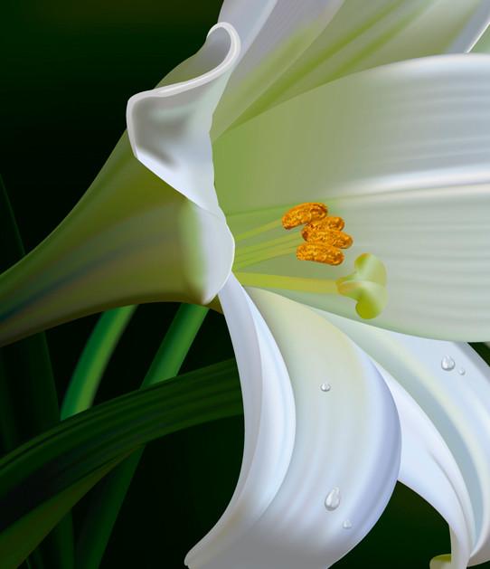 Rajesh sawant lilies zoom