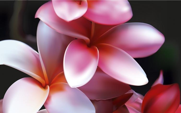 Rajesh sawant flowers zoom