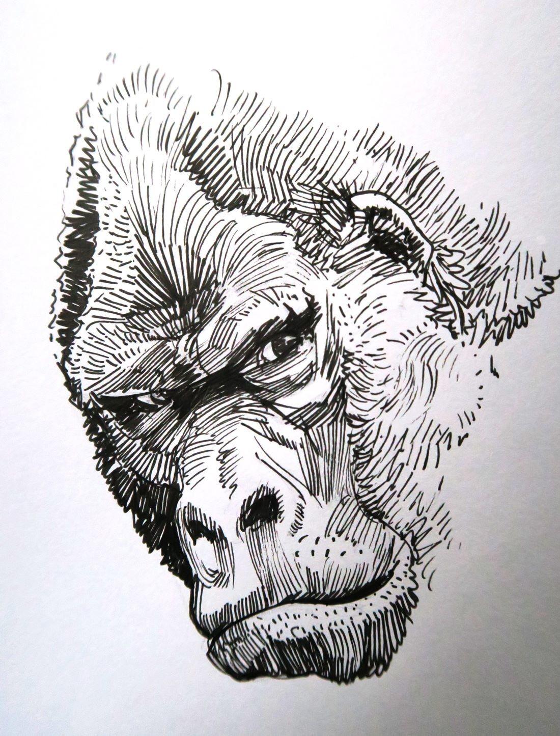 Hugo puzzuoli gorille face