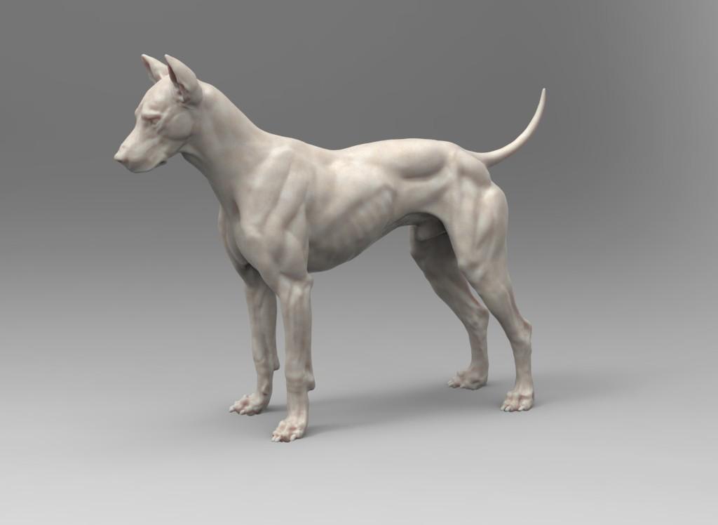 steve lord - Canine Model