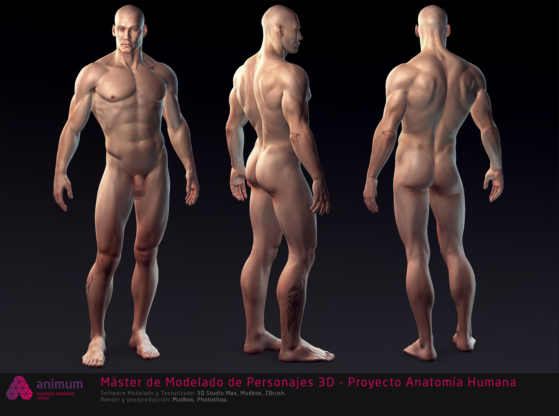 Outstanding Zbrush Human Anatomy Ensign Physiology Of Human Body