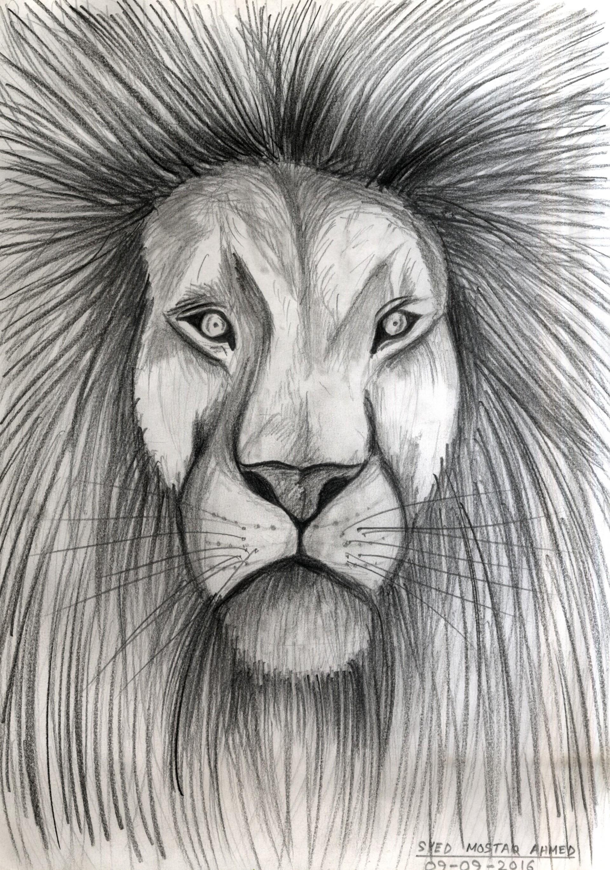 Lion face pencil sketch