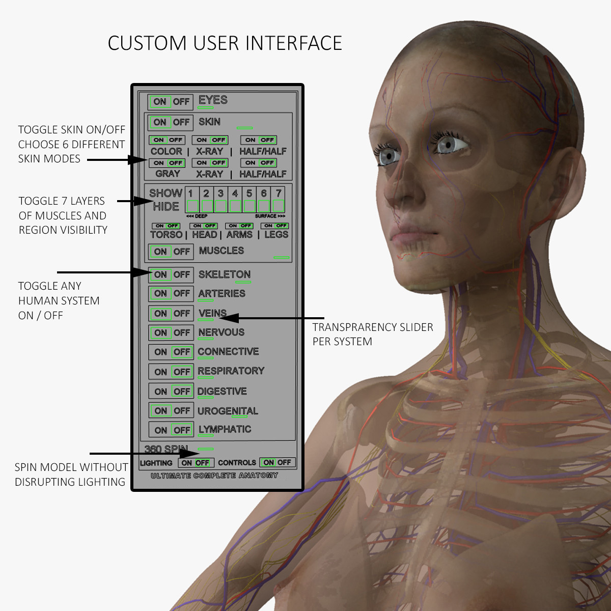 Facial Surface Anatomy Images - human body anatomy