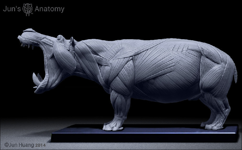 https://cdna.artstation.com/p/assets/images/images/004/270/940/large/jun-huang-jun-huang-hippo-muscle-openmouth-846b4c6f-e49f-483a-9673-ac7163be65fe.jpg?1481883221