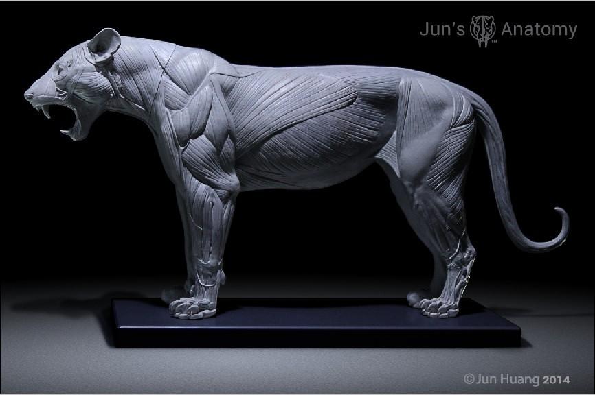 Artstation Lion Anatomy Model Jun Huang
